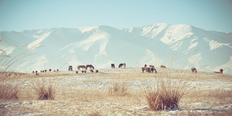 Montagnes du Kazakhstan