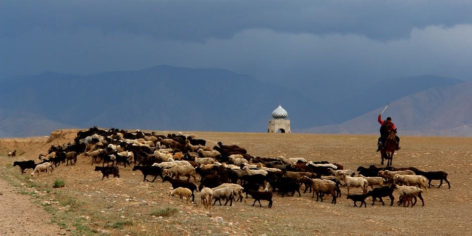 Kirghizstan, le pays du cheval